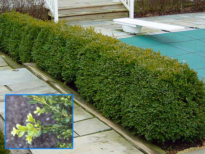 Shrubs A Gallery Of Images Or Photos Blue Sky Landscape