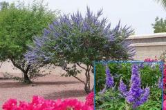 Lavender Tree (Deciduous)