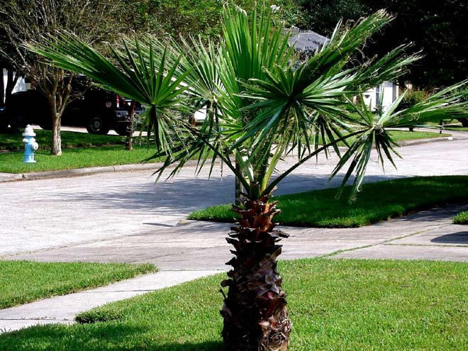 Trees For North Texas Deciduous And Evergreen Shade Or